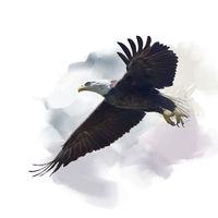 american bald eagle watercolor