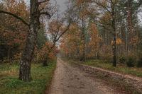 Weg durch die Lueneburger Heide