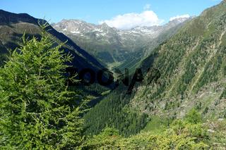 Zirbenwald an der Waldgrenze, Niederthai, Ötztal, Österreich