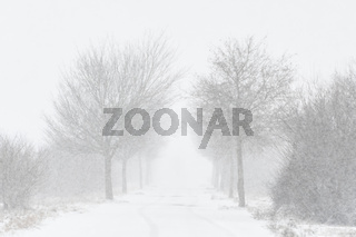 Road with trees and strong snowfall