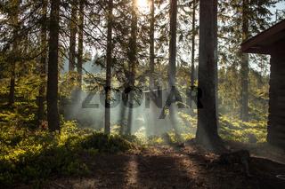 Sonnenstrahlen durch die Bäume