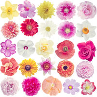 Many different flowers isolated on white
