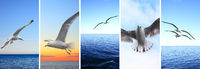 Flying birds over sea