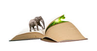 Elephant walking on the book pages to hidden nature. Creative education ecology concept. Magic manipulation background. Love read. Knowledge symbol. Book day