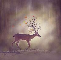 Deer in the fall woods