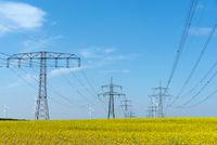 Stromleitungen in einem Rapsfeld