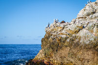 Sea lions on a rock in Kaikoura Bay