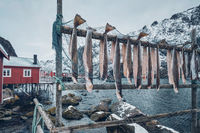 Drying stockfish cod in Nusfjord fishing village in Norway