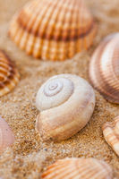 Detail of sea shells with sand as holiday concept