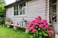 Gardenshed still life with pink hydrangea