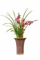 beautiful orchids bonsai isolated