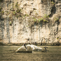 Birds In River Of Sumidero Canyon Mexico