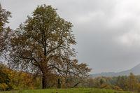 Herbst im Pfaelzerwald