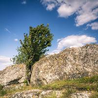 giant boulder with cherrytree in Burgenland Austria