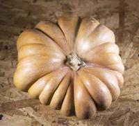 big Fresh pumpkin
