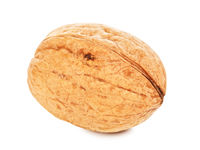 Single Walnut In A Shell