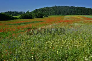 Landschaft auf der Schwäbischen Alb mit Klatschmohn- und Kornblumenwiese