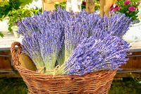 Lavender bouquets - bunches of violet flowers into a wicker basket.