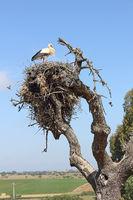 Storchenbaum im Alentejo in Portugal
