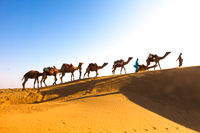 Desert Caravan India