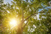 tree top in fall season with sun