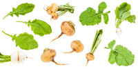 various greens and roots of turnips isolated