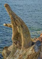 Schwemmholz an der Rheinmündung in den Bodensee bei Fußach, Österreich