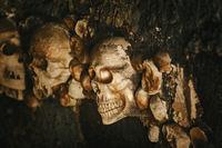 Skulls in the Wall
