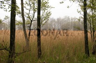 Landschaft 001. Fischland Darss Zingst. Deutschland