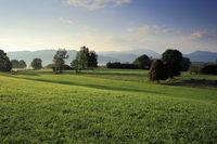 Wiesenlandschaft in Bayern