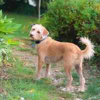 little cross breed dog