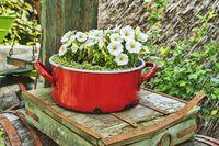 Weisse Petunien | white Petunias