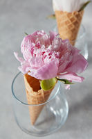 Delicate pink peony flower in a wafer cone in a glass standing on a gray stone table.