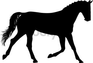 Animal silhouette of black mustang horse illustration