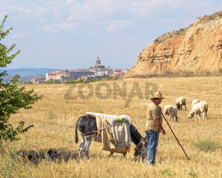 Shepherd near Viana