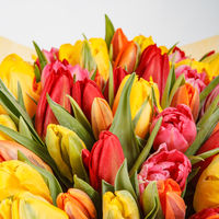 Close-up of orange tulip with yellow and red tulips. Flower spring bouquet background