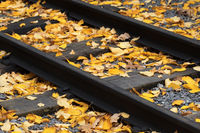 Old railway strewn with yellow fallen leaves