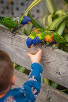 Little boy feeding parrots in zoo