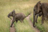Baby elephant crosses track followed by others