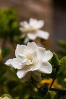Unusual Tropical Flower