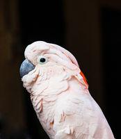 parrot portrait on a black background