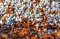 Autumn leaves on pebble beach