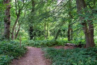 Path through Banstead woods