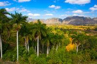 Famous Cuba farmland tobacco area, Valley de Vinales,Cuba.