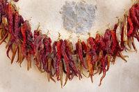 Zum Trocknen aufgehängte Chilies
