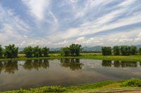 Waterbody and Bamboo Groves near Brahmaputra River, Assam, India.