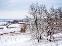 Winter landscape with vineyards on lake neusiedl in Burgenland