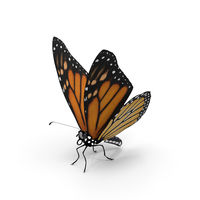 Beautiful butterfly on white background. 3D rendering.