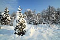 winterlich eingeschneite Bäume