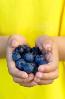 Blaubeeren Heidelbeeren Früchte Beeren Blaubeere Heidelbeere Frucht Beere Sommer halten Hände Hochformat